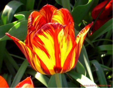 Blumen / Flores / Flowers