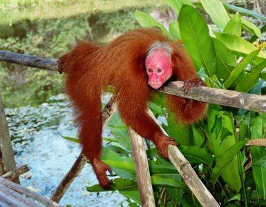 Peru: Iquitos + Urwald – Selva – Jungle