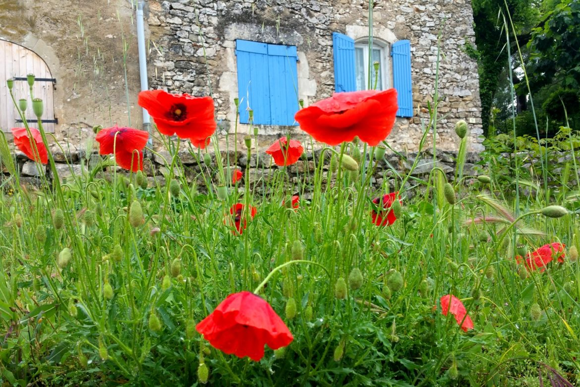 Mohn / Amapolas / Poppies